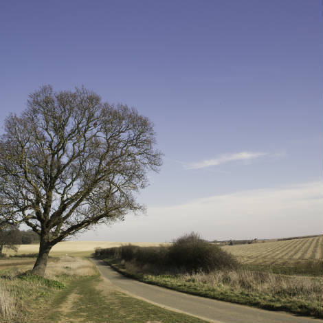 Ringstead