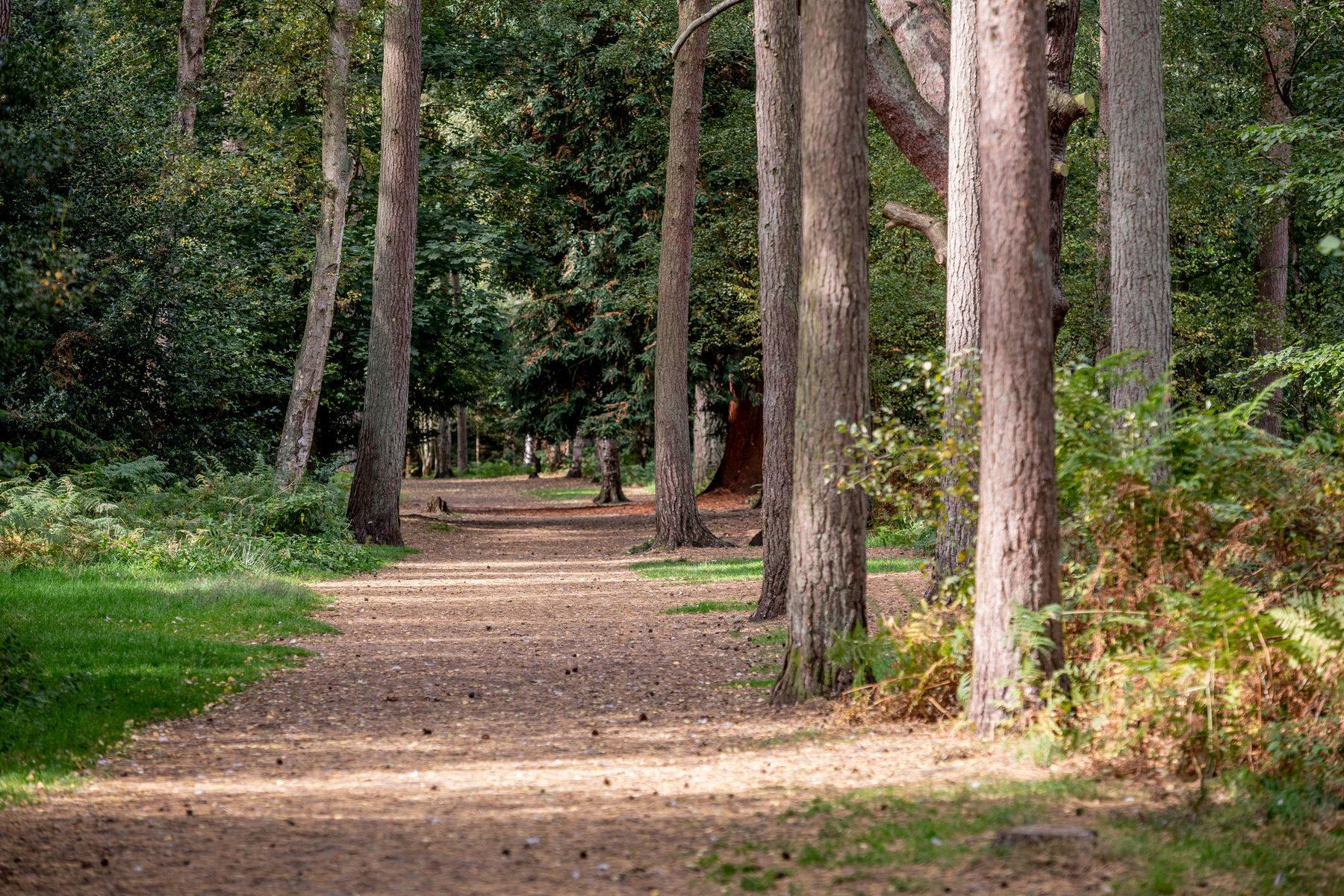 008 Sandringham Trails 2018