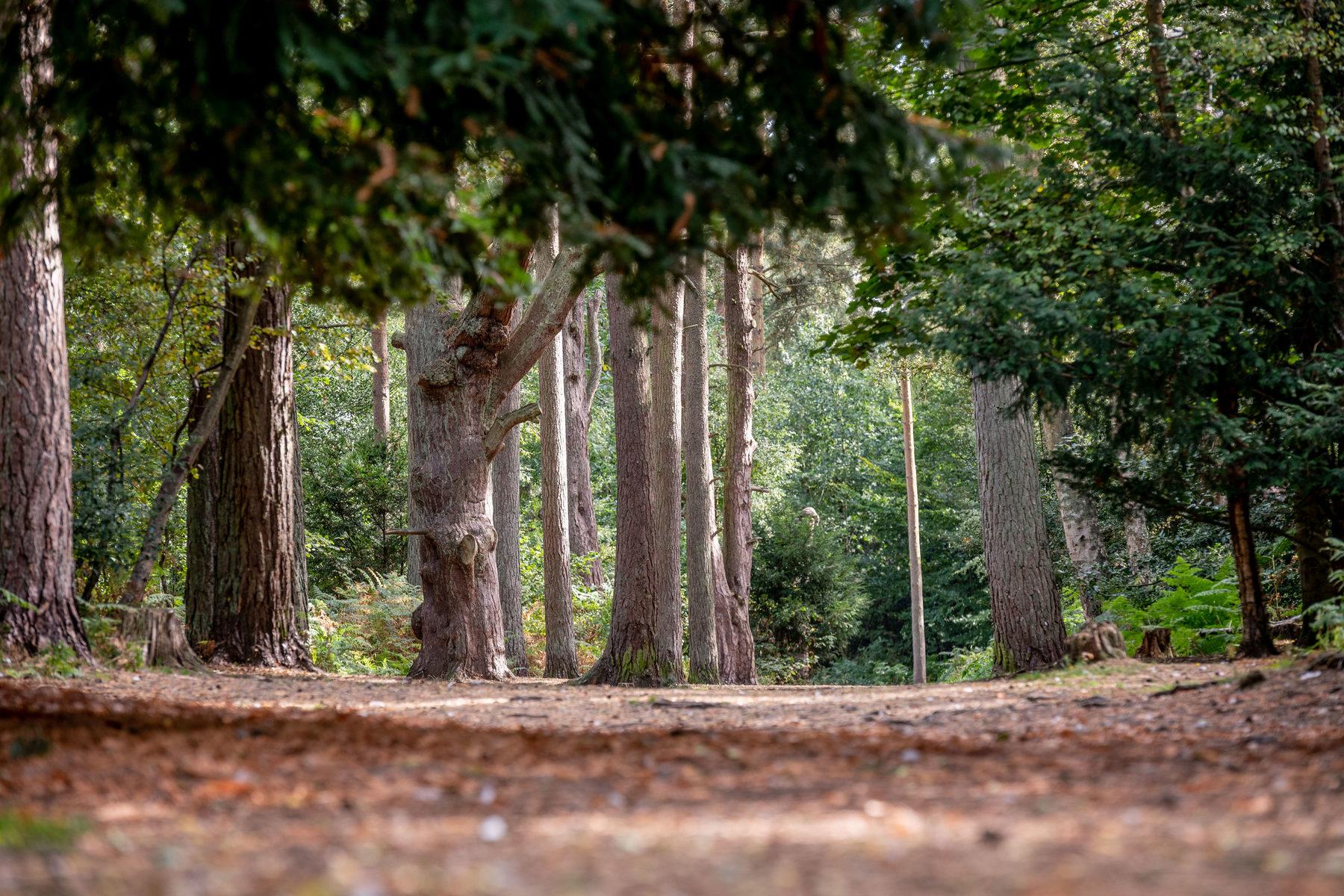 017 Sandringham Trails 2018