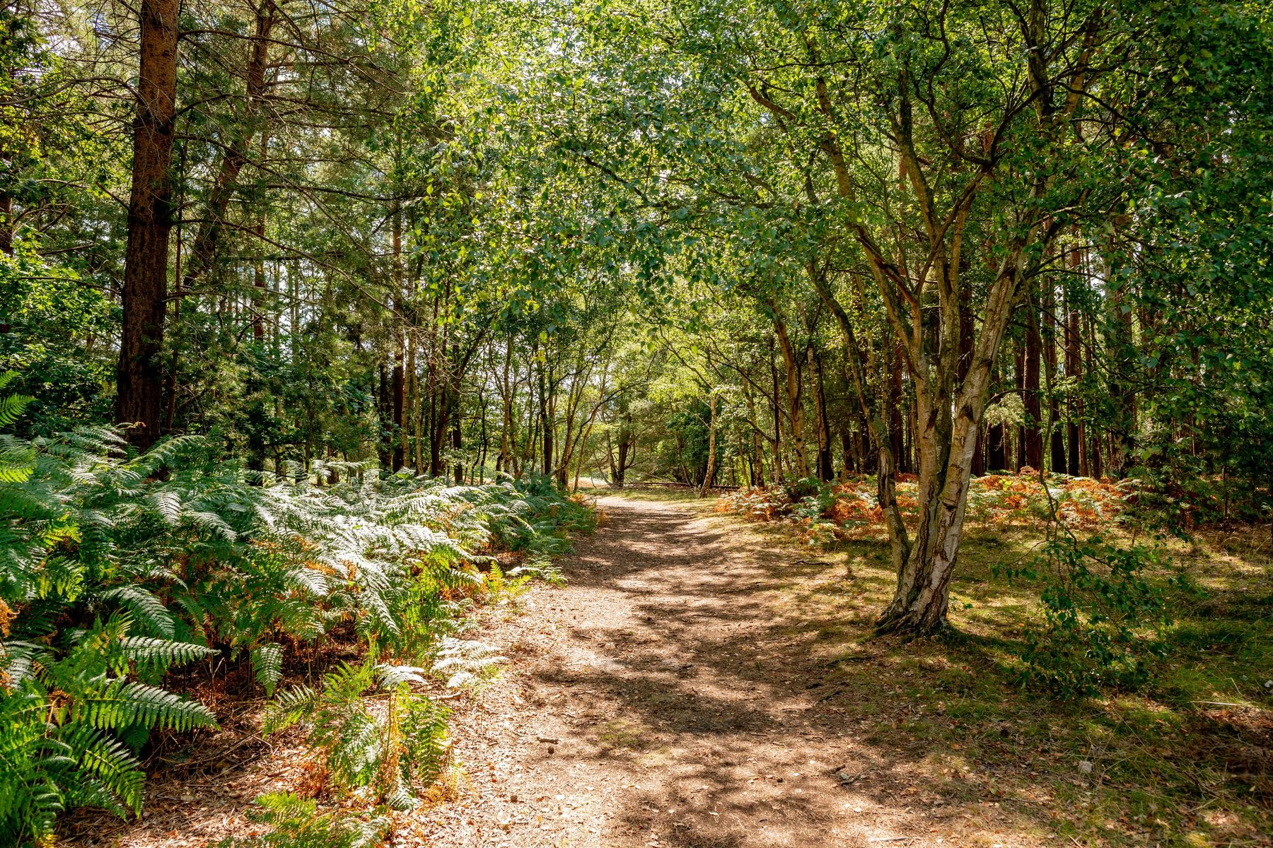 035 Dersingham Bog 2018