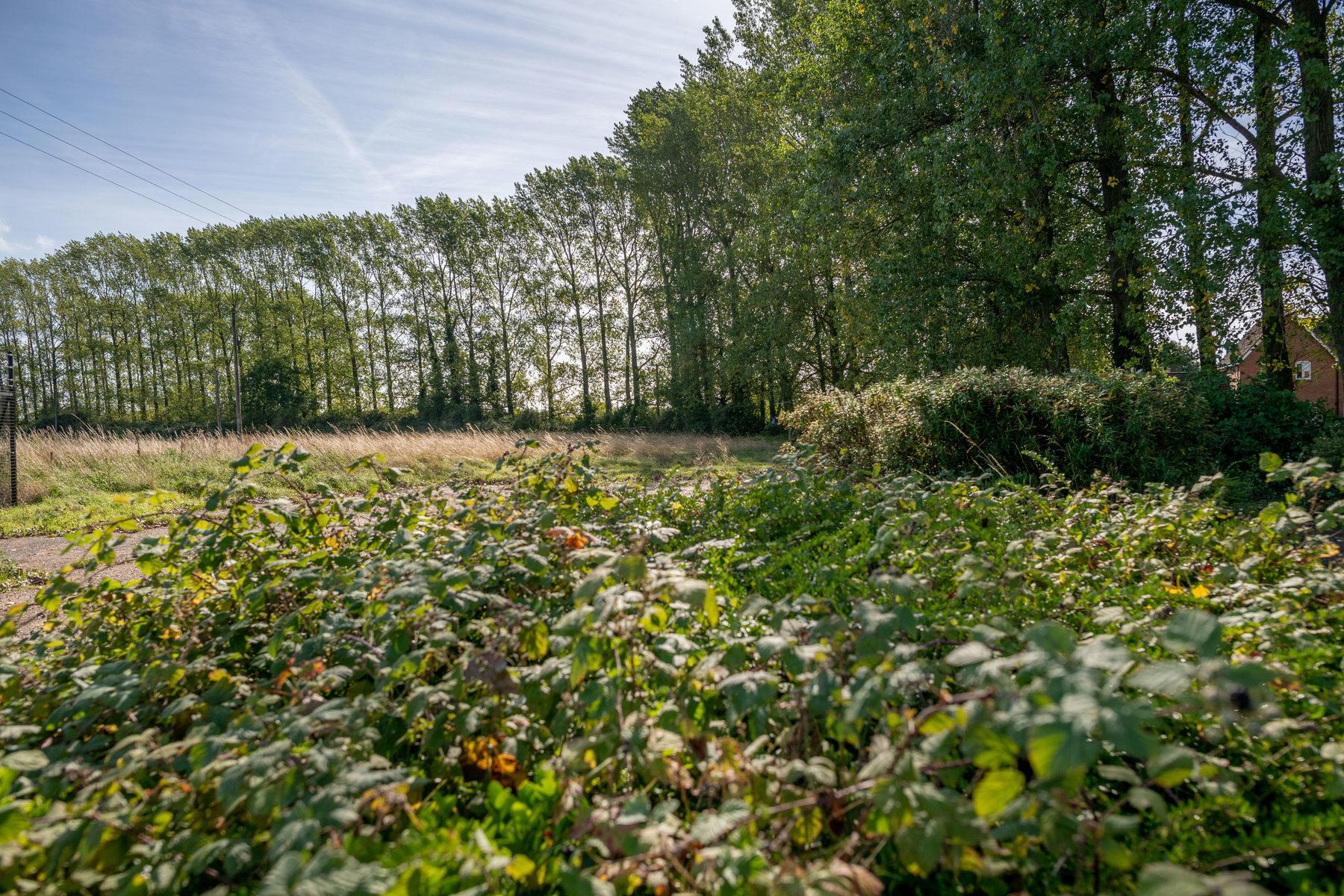015 Howdale Rabbit Lane 2018
