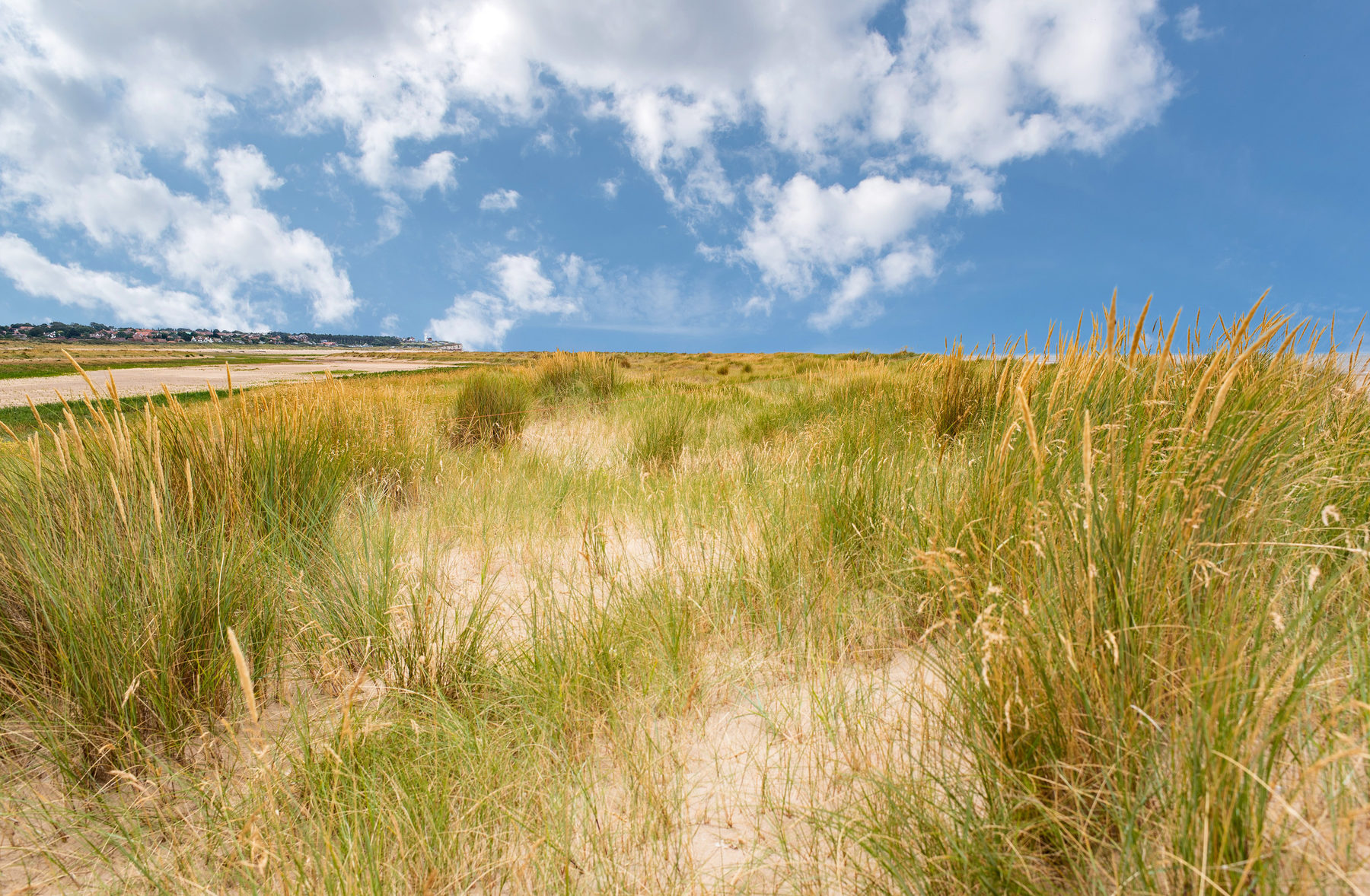 Holme Dunes 7